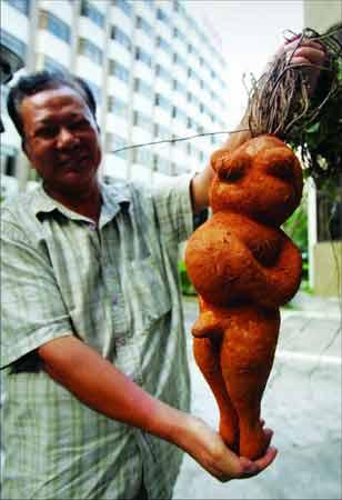 Фо-Ти (Fo-Ti Root) - мъжка фигура