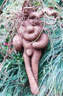 Фо-Ти (Fo-Ti Root) - мощен афродизиак