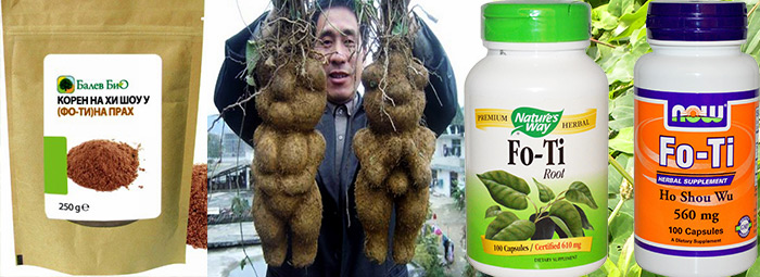 Фо-Ти (Fo-Ti Root) - коренът за дълъг живот