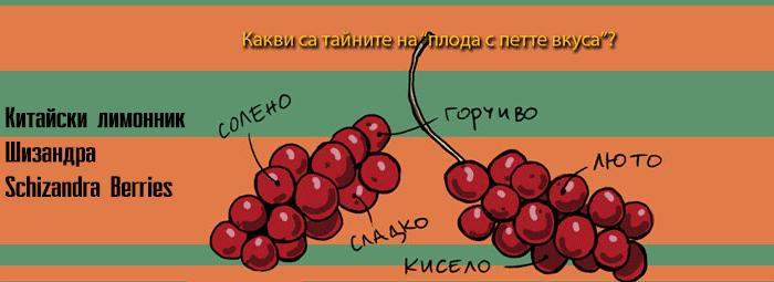 Китайски лимонник (Schizandra) - адаптоген и мощен антиоксидант