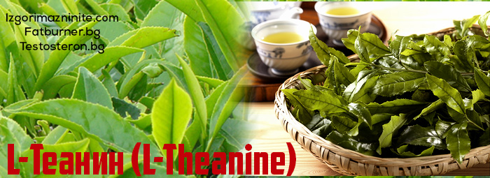 Л-Теанин (L-Theanine)