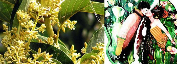 Потентното дърво (Muira Puama) - афродизиак за двата пола