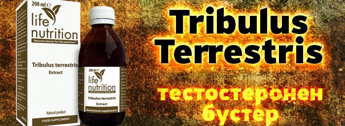 TRIBULUS TERRESTRIS – тестостеронен стимулатор