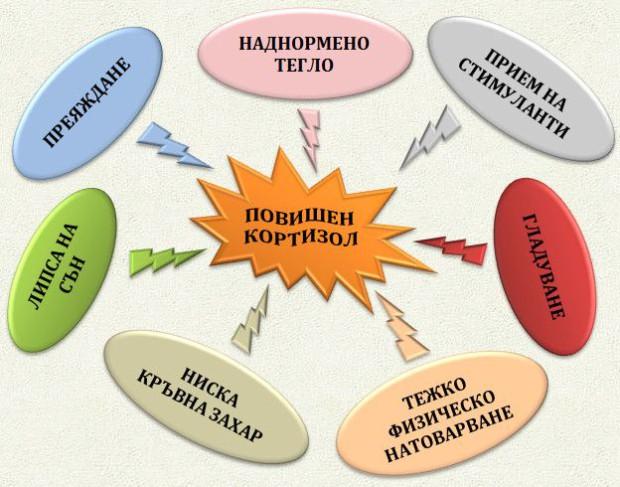 Кортизол Cortisol