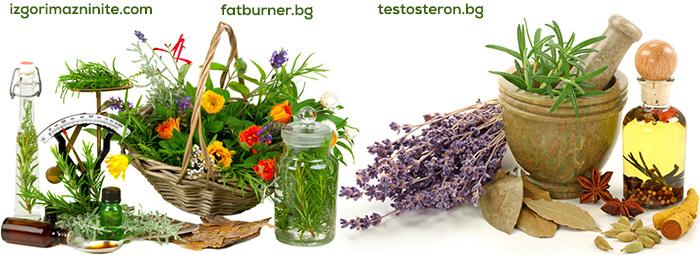 Приготвяне на лекарствени форми от билки