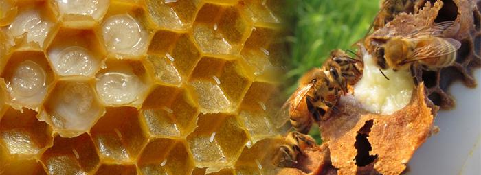 Пчелно млечице (Royal Jelly) - завършена функционална храна