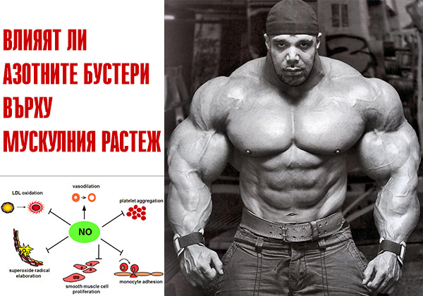 Влияят ли азотните бустери върху мускулния растеж