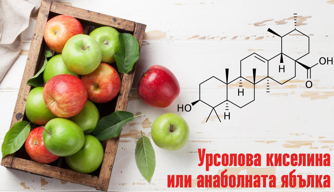 урсоловата киселина (Ursolic acid)