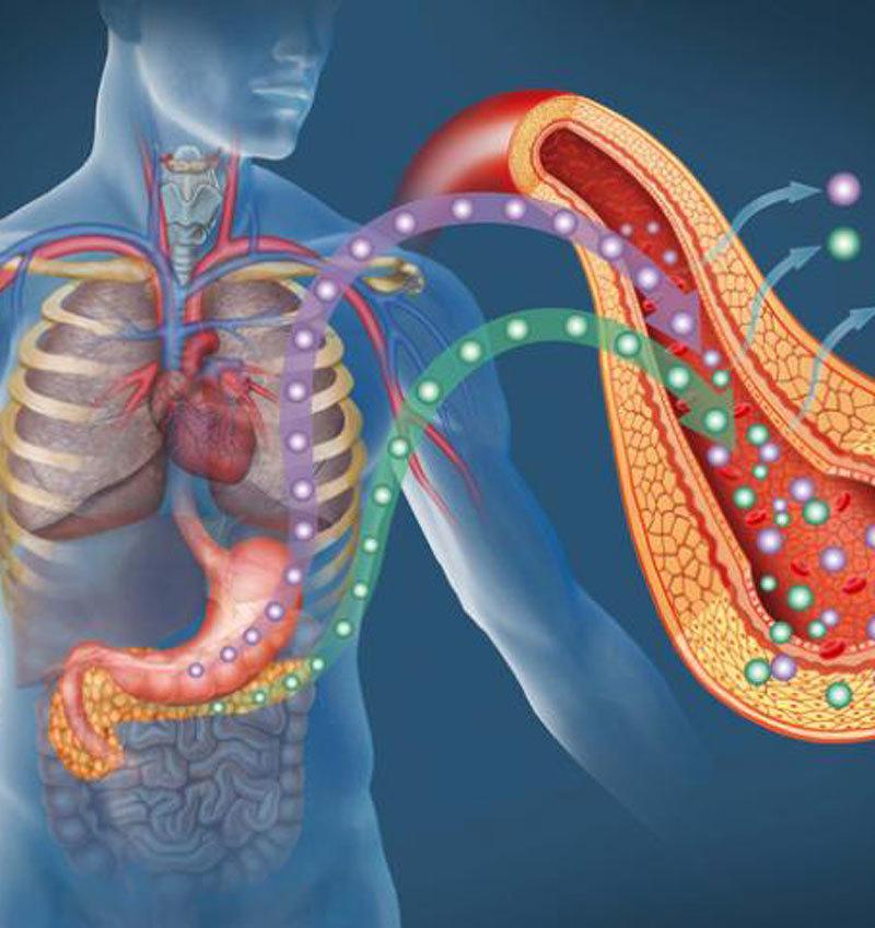 Инсулин и панкреас