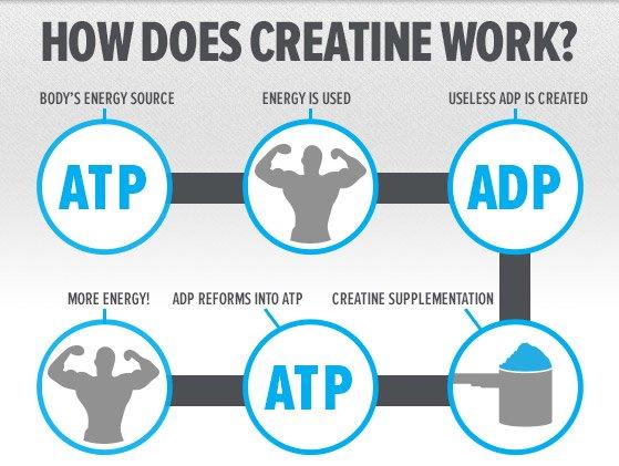 Как действа креатин