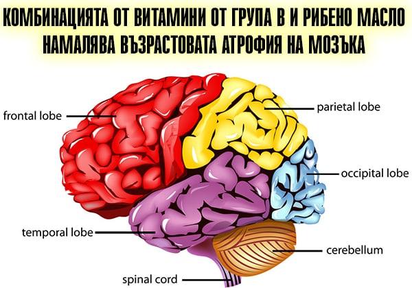 Комбинацията от витамини от група В и рибено масло намалява възрастовата атрофия на мозъка
