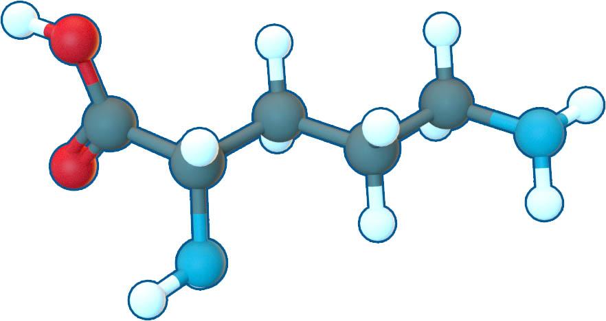 l-ornithine структурна формула
